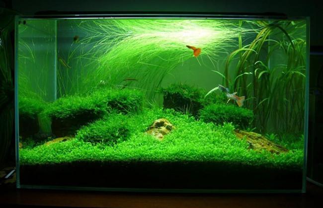 生态鱼缸/水草鱼缸视觉效果