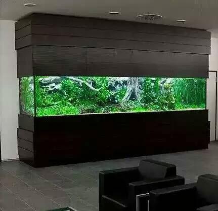 水草鱼缸实景