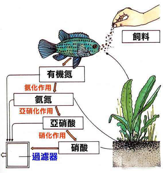 硝化细菌原理图