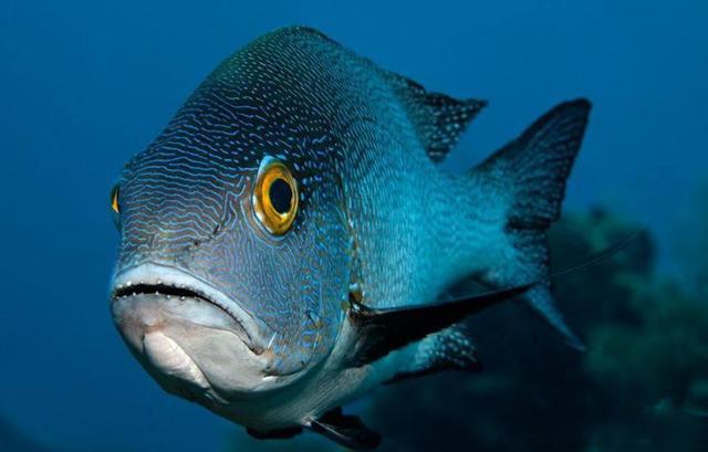 海水观赏鱼