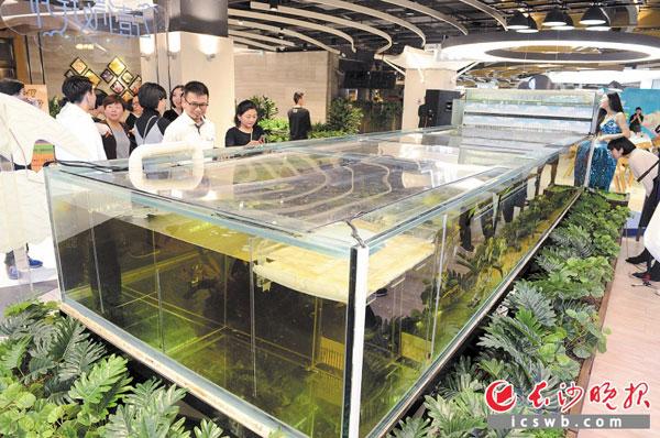 湖南最大室内鱼缸