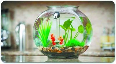 自动换水鱼缸