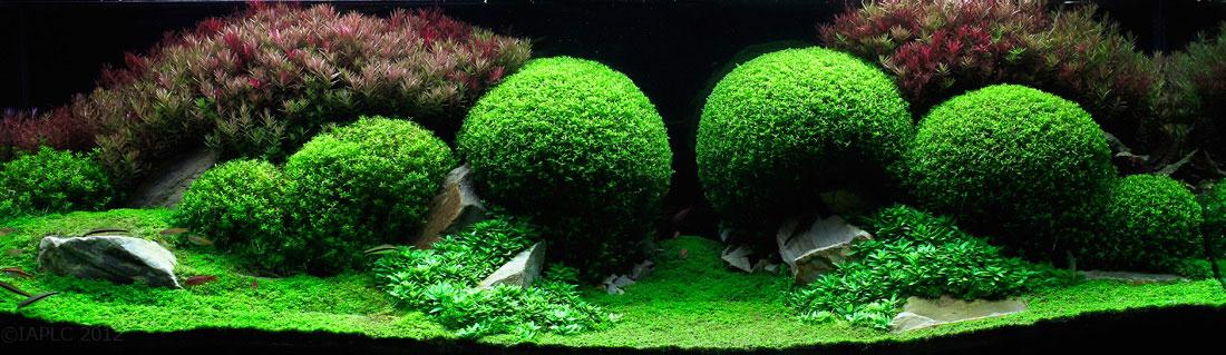 水草造景设计大赛获奖作品