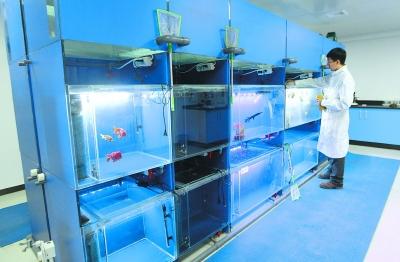 北京观赏鱼医院:观赏鱼治疗
