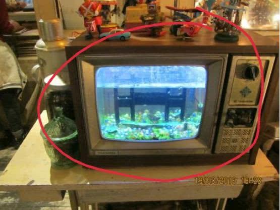 老旧电视机改成水族鱼缸