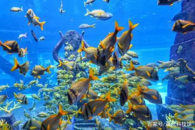 造价接近一个亿的鱼缸你见过吗?这缸足足有八层楼高