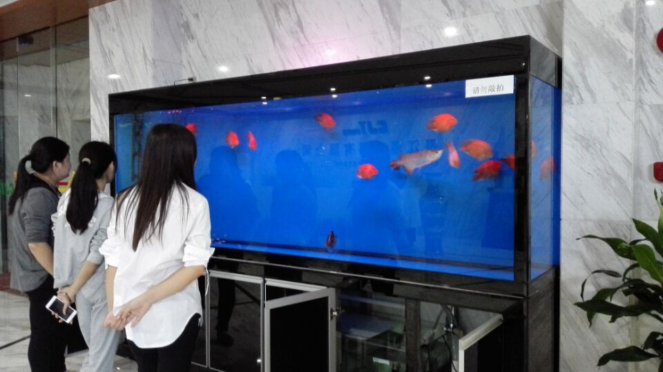 中大型鱼缸案例