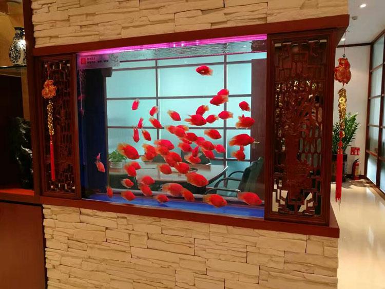 用超清玻璃制作的鱼缸