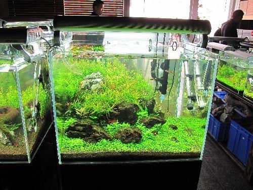 生态鱼缸展示效果
