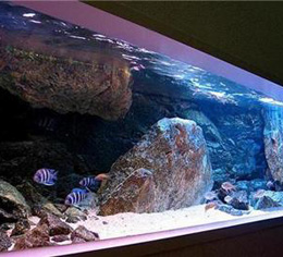 水族鱼缸展示