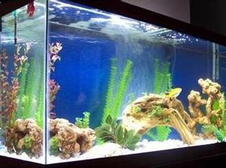 大型水族鱼缸