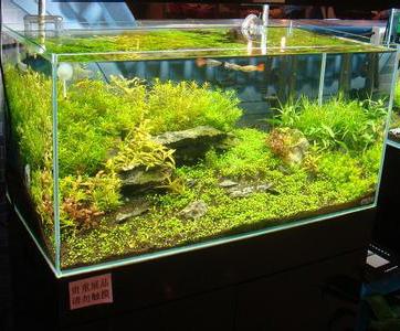 水草鱼缸,水草鱼缸造景