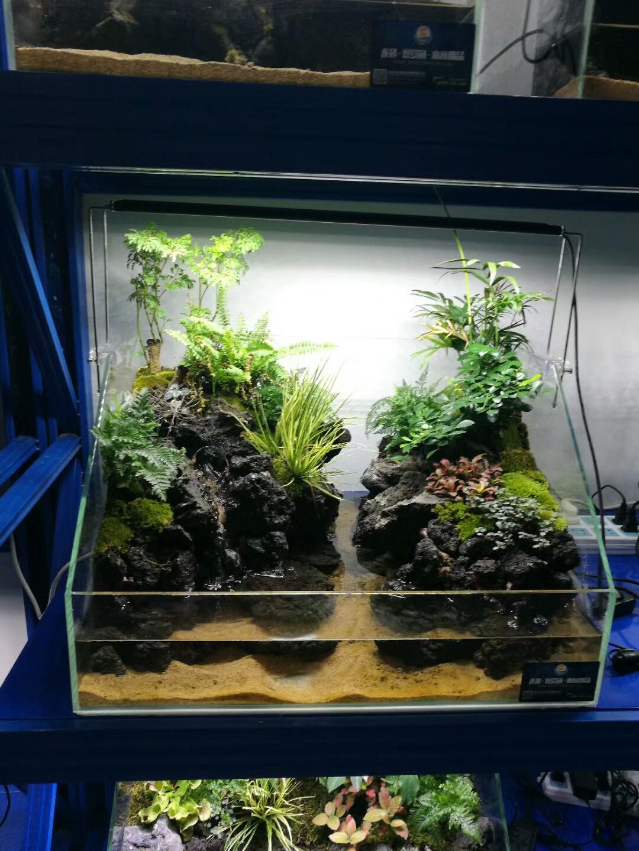 小型生态鱼缸