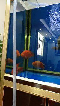 鱼缸清洗换水后的效果
