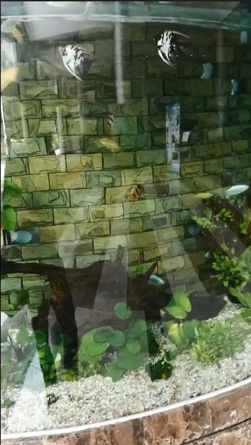 生态水族、水草景鱼缸实拍