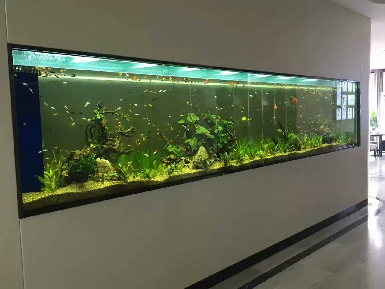 生态水草缸效果展示