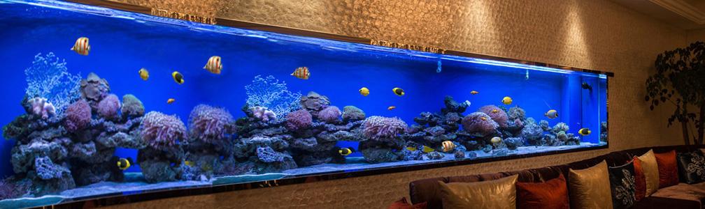餐厅水族鱼缸定做工程