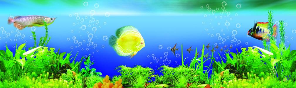 生态鱼缸定做水族箱造景